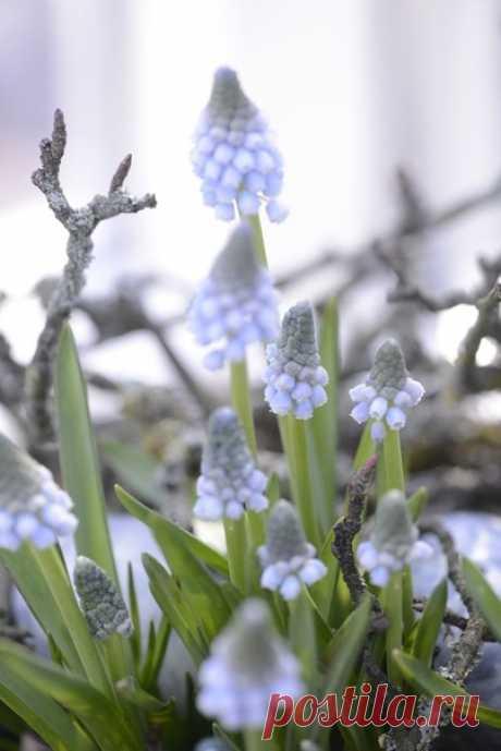 В старом саду просыпаются яблони, груши и вишни. Ветер весенний, от нечего делать, качает пустые качели. Шепчутся сонные травы под тающим снегом чуть слышно. Чистое небо солнцем лучится в синих глазах Апреля...