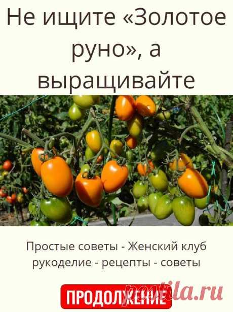 Не ищите «Золотое руно», а выращивайте