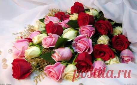 Давным-давно, когда у нас с будущим мужем ещё не было общих машин, дома и планов на отпуск, он принёс мне цветы. Такой простенький букет не первой свежести, на заправке в спешке купил.   — А ты знаешь, — сказала я ему, расправляя помятые розы, — у нас, эзотериков, есть такое поверье, что чем дольше стоят подаренные цветы, тем крепче будут отношения. Показать полностью…