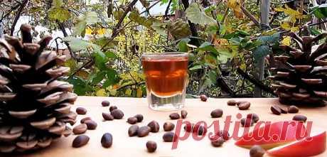 Настойка на кедровых орешках: польза, применение, лечение и народный рецепт.