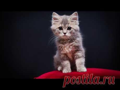 """Кошки, кто они? - Вы когда-нибудь задумывались над вопросом: """"Кто такие кошки""""? Я - неоднократно. И вот что я заметила... Кошки, кто они? Я думаю, что кошки тесно связаны с потусторонним миром, ведь не зря древние Египтяне поклонялись кошкам и считали их священными животными. А на одном папирусе древнего Египта была найдена надпись, сказанная о кошке: """"Когда ты думаешь - она слышит тебя, даже если ты не произносишь ни слова. Взглядом Бога она читает в тебе твои мысли""""..."""
