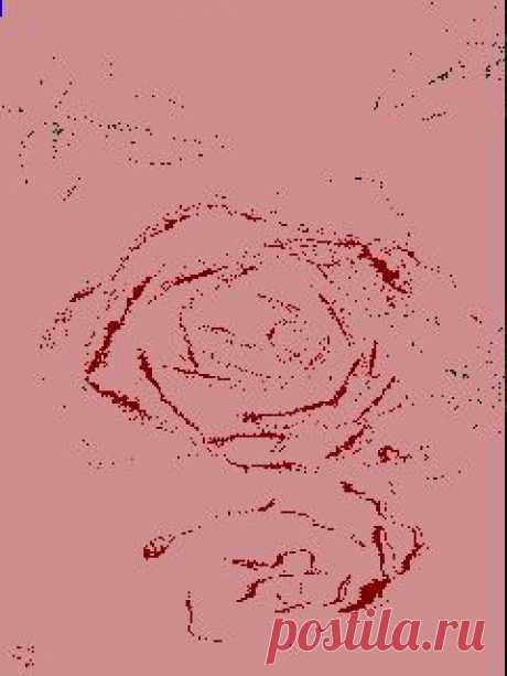 Роза - Розы