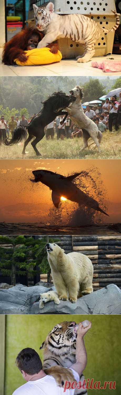Фотографии животных за неделю | Четвероногий юмор