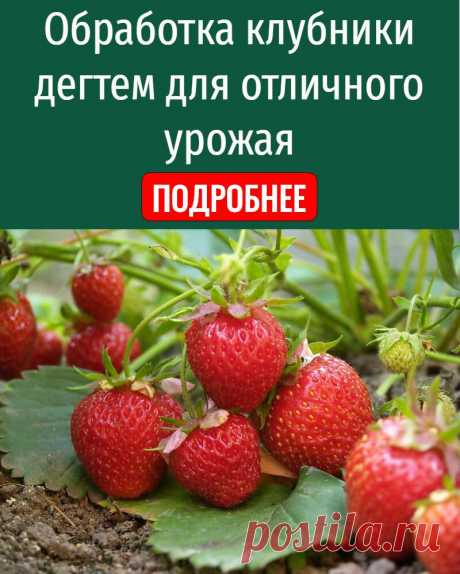 Обработка клубники дегтем для отличного урожая