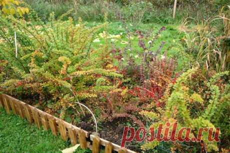 El jardín en la depresión: la decisión para la parte pantanosa. La foto