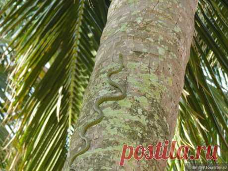 Опасайтесь зелёного змия