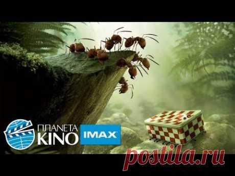 Букашки. Приключение в Долине муравьев - русский тизерный трейлер - YouTube