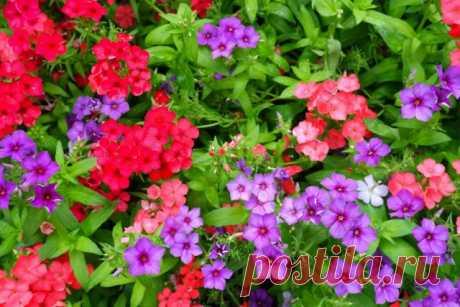 Какие цветы надо сеять на рассаду в марте | Рассада (Огород.ru)