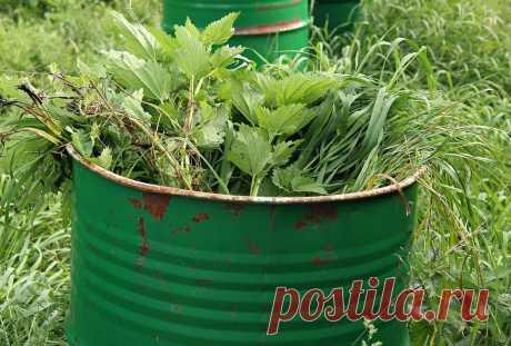 За 4 дня готовлю горячее удобрение из травы – спасат от прополки и ускоряет рост моих посадок – ЗАГОРОДНЫЙ
