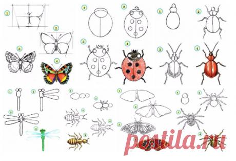 Учимся рисовать насекомых с детьми   https://vk.com/i_d_t?w=wall-31805219_163300