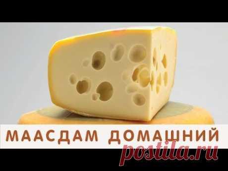 Готовлю сыр Маасдам