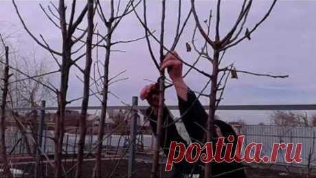 Зимняя обрезка яблони, дополненная формирующей. Подписывайтесь, дальше будет много нового.