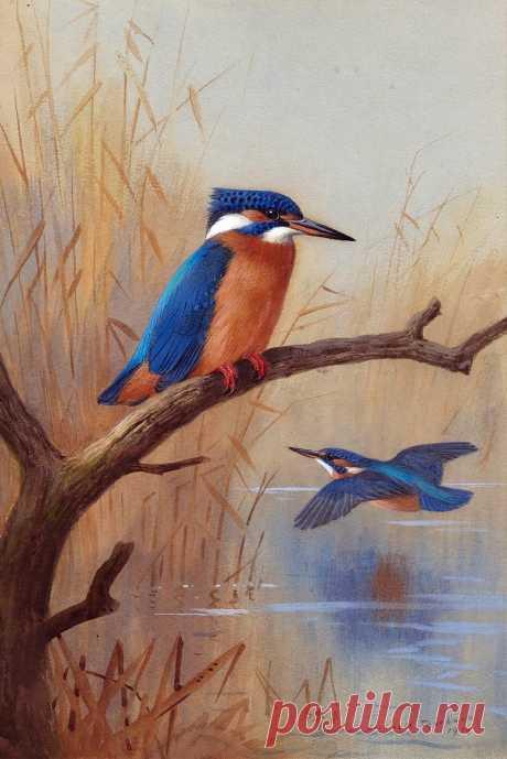 Много в мире разных птиц. Художник Арчибальд Торбен