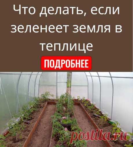 Что делать, если зеленеет земля в теплице