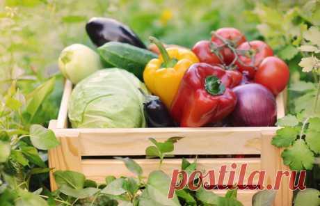 Спасаем урожай от вредителей | Урожай под защитой | Яндекс Дзен