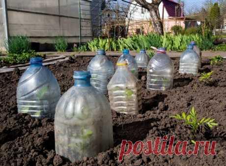 Как вырастить огурцы в большой бутылке Как вырастить огурцы в большой бутылке на балконе или огороде.