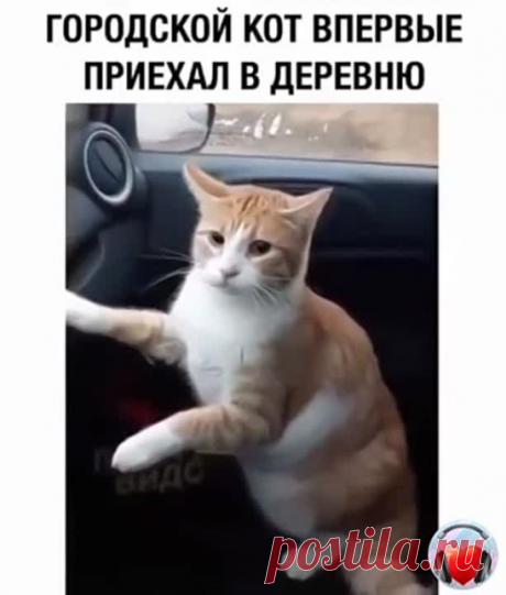 Cat shocked