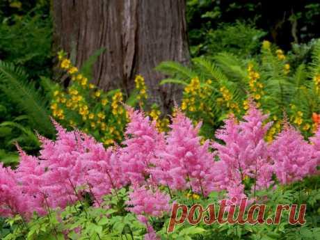 Цветковые растения, которые цветут все лето: список