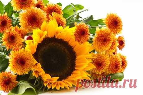 Обои на рабочий стол Цветы:Цветы, Подсолнухи, Фон - скачать бесплатно.   Обои-на-стол.com