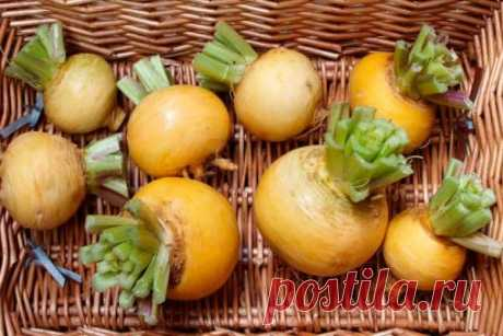 Как вырастить репу сочную и вкусную — 6 соток