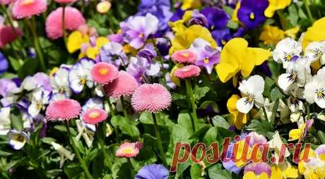 8 красивых растений для сада, цветущих весь дачный сезон Хотите, чтобы сад всегда напоминал о лете — оформите клумбу, которая цвела бы непрерывно. При грамотном подборе растений это более чем реально.