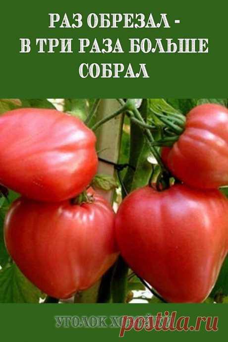 Хочу рассказать об одном интересном способе выращивания томатов, которым пользуюсь, третий год и результаты радуют.