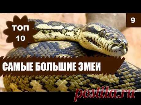 🐍САМЫЕ БОЛЬШИЕ ЗМЕИ МИРА! ТОП 10 - YouTube