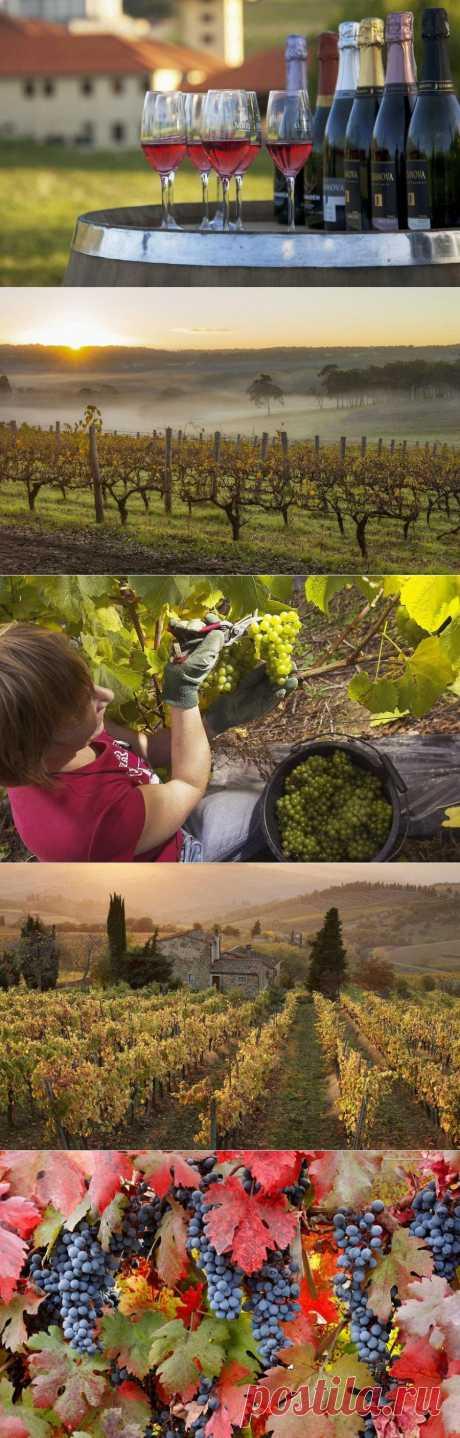 » Лучшие регионы виноделия Это интересно!