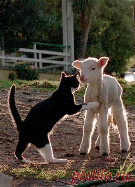 Lulu & The Lamb   Flickr - Photo Sharing!