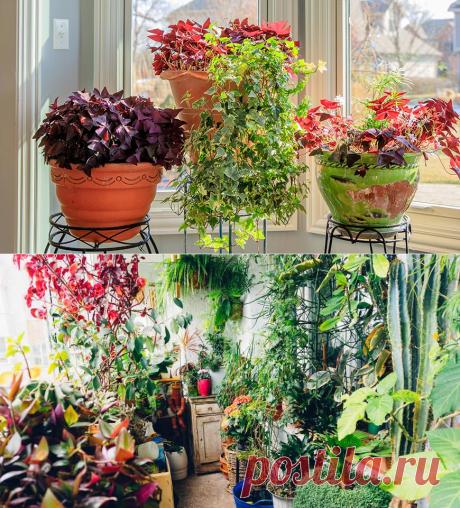 6 комнатных растений, которые приносят удачу на Supersadovnik.ru