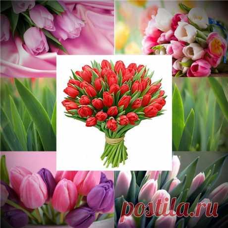 Выращиваем тюльпаны дома - Дом и дача - ГОРНИЦА - дайджест новостей, авторские блоги