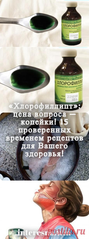 «Хлорофиллипт»: цена вопроса — копейки! 15 проверенных временем рецептов. - interesno.win