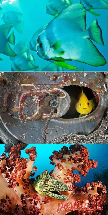 » Что на дне Японского моря? Это интересно!