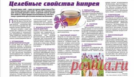 Праздничный травяной чай. Иван-чай