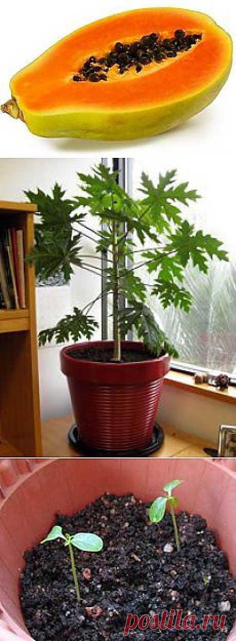 Home garden|Сад, огород, растения дома | ВКонтакте