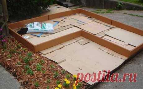 Как я использую картон на своем дачном участке | На Даче | Яндекс Дзен