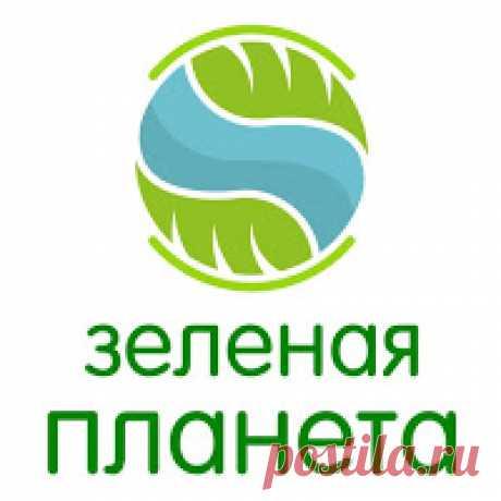 Канал   Зеленая планета Главная цель нашего канала, помочь Вам, уважаемые друзья, в выращивании достойных урожаев!