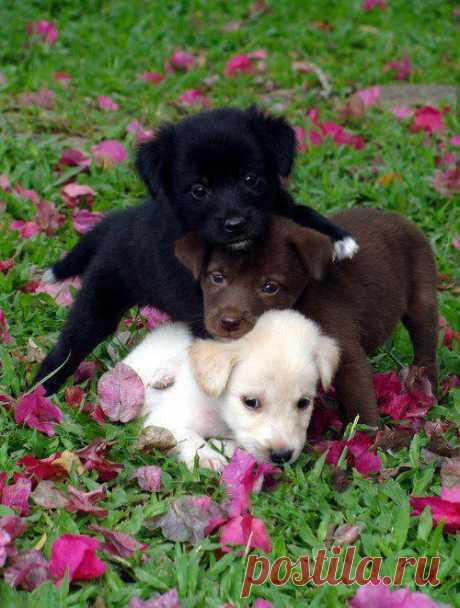 Everybody loves flowers!
