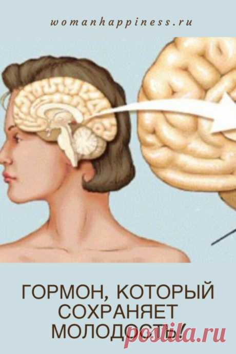 Гормон молодости - время назад  Этот гормон называют — «гормон молодости и красоты». И не зря! Мелатонин оказывает мощный антиоксидантный и противоопухолевый эффект! Мелатонин — это гормон молодости! Как наладить его выработку в организме?