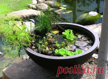 Садовые мини-водоемы в емкостях: фото ~ Planetalsad