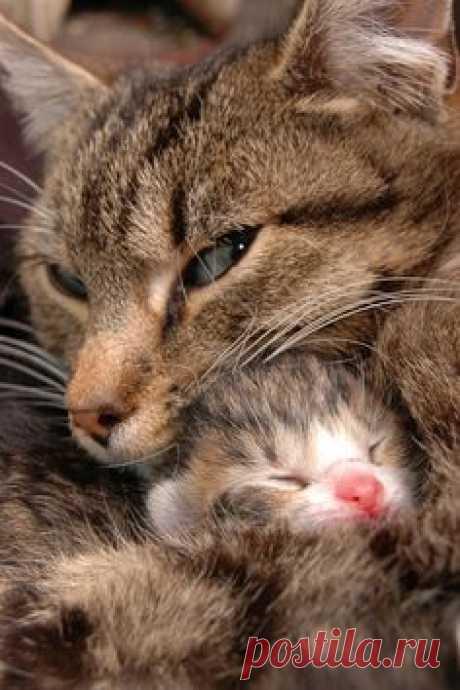 mom cat & tiny kitten