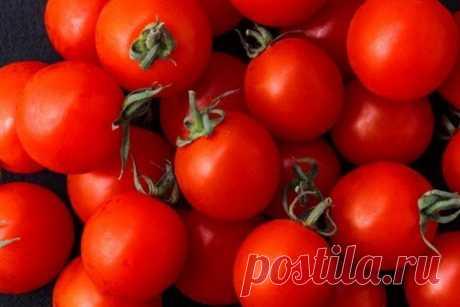 Самые неприхотливые сорта томатов | Томаты (Огород.ru)