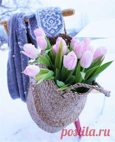 (19) ГУГЛЯТА+ Каким бы не был февраль, он коротенький...  А за ним придёт весна, и эта мысль уже согревает душу.)