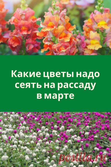 Какие цветы надо сеять на рассаду в марте