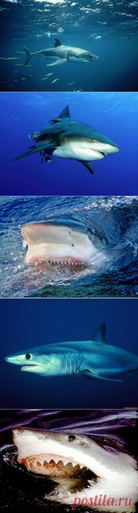 Так ли страшны акулы, как их малюют?