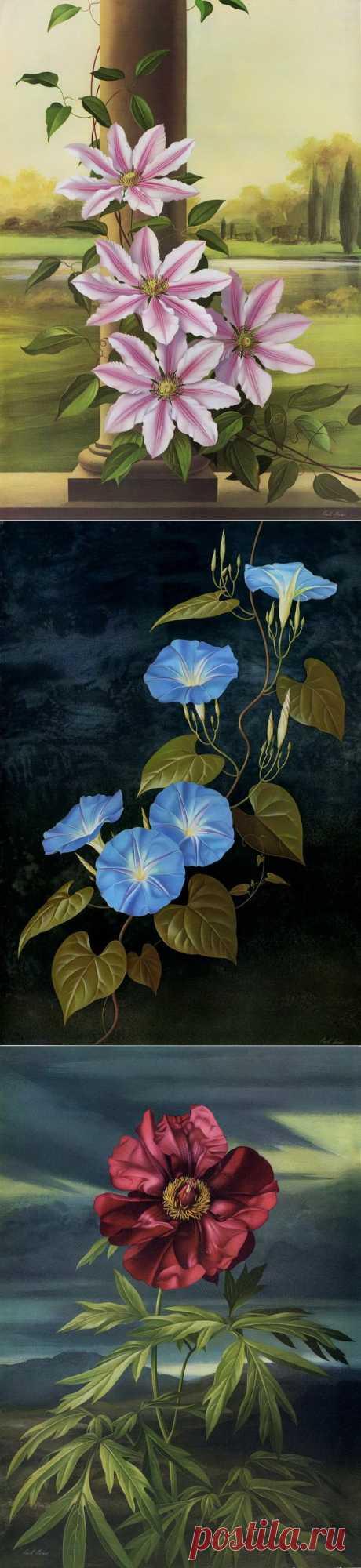 Paul Jones. Water color drawings of flowers