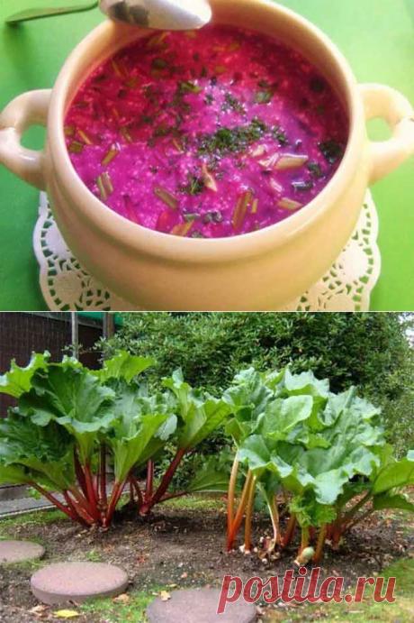 Блюда из ревеня — 20 полезных и вкусных рецептов приготовления