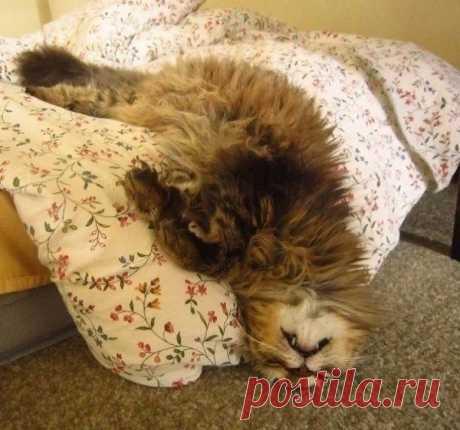 Делай как кот - спи при любых обстоятельствах — Убойный юмор