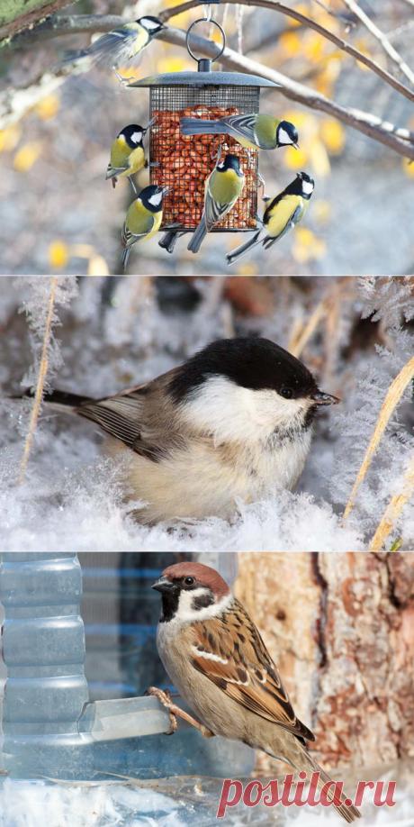 Как и каких птиц подкармливать зимой//ОПТИМИСТ