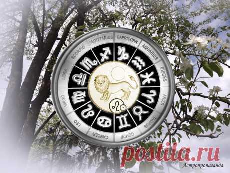 Преодолеть разногласия. Гороскоп для Льва с 29 марта по 2 мая 2021 | Астропропаганда | Яндекс Дзен ♌✨ Автор: астролог Нина Стрелкова. ✧ Вас могут волновать проблемы, касающиеся не только лично вас и ваших близких, но и человечества вообще. Ваши взгляды на политику, духовную сферу, на будущее, которое всех ожидает, могут кому-то не нравиться. В том числе людям, важным для вас. Это обычное дело, что у людей разное мировоззрение. И не всегда нужно яростно отстаивать свои взгляды...